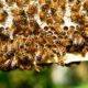 méh, méz